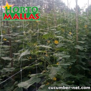 Cucumber Trellis Spacing